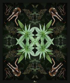 Green star by SilverCox.deviantart.com on @deviantART