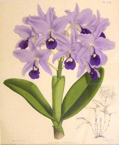 Botanical Prints in Lavender -designercolorsensation