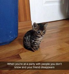 Internet Animals Are Funnier With Captions - 25 Pics