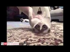 Epic Funny Cats / Cute Cats Compilation  -  60 minutes!! [HD][HQ]