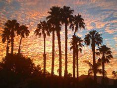 Sunset in Palm Desert  Sent by: Tom Bolton
