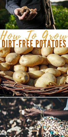 How To Grow Dirt-Free Potatoes - DIY