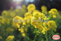 http://nassugallery.saleshop.jp/  写真が50円☆激安です! Nassu☆Gallery #photo #japan #flower #plants #花 #植物