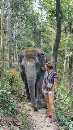A Magical Encounter at the Elephant Jungle Sanctuary - The Ginger Wanderlust Thailand Travel Guide, Asia Travel, Travel Tips, Best Elephant Sanctuary Thailand, Elephant Family, Future Travel, Chiang Mai, Countries Of The World, Maldives