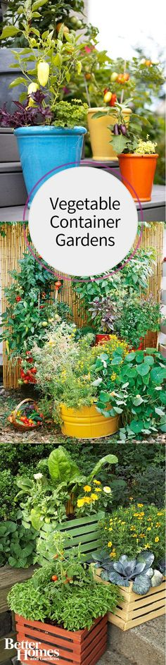 Are you considering a vegetable container garden? Check out our tips and tricks for growing your produce in pretty pots. Try hanging baskets, using recycled containers, combining different colors of plants in containers, growing herbs, using different textures, and more! Add interest to your yard and get a great harvest at the same time!
