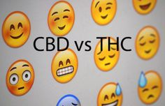 Main differences and advantages of CBD vs. THC: Cannabidiol (CBD) and Tetrahydrocannabinol (THC) are two of the main active substances in cannabis: both are cannabinoids. Many cannabis species are known to contain a high level of THC and low CBD. Cannabis, Articles, Labs, Mj, Blog, Stickers, Ganja, Blogging, Labradors