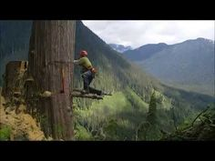 West Coast Falling   Canadian style http://www.agromachinery1.com/video_listing/west-coast-falling-canadian-style/