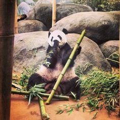 Memphis Zoo & Aquarium in Memphis, TN