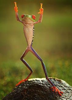 12 unglaubliche Tierfotos die keine Photoshops sind Tierfotos erstaunliche Tierbilder 12 Unbelievable Animal Photos That Are Not Photoshopped - animal photos, amazing animal pictures High-Fiving Frog (na ja, High-Two-ing) mal zwei ! Amazing Animal Pictures, Amazing Animals, Funny Animal Pictures, Animals Beautiful, Amazing Pictures, Animal Pics, Hilarious Pictures, Animals Photos, Animals And Pets
