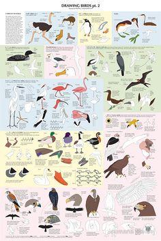 drawing birds pt. 2: drawing, birds, tutorial, how-to, diy