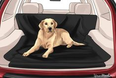 How to Remove Dog Odors from Your Car
