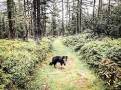 Alpe-Adria-Trail Trail, Dog Food, Hiking, Woodland Forest