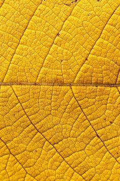 Yellow leaf texture /