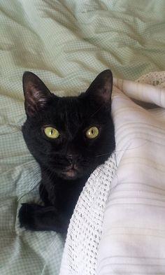 Blacky Under Cover | Flickr - Photo Sharing!