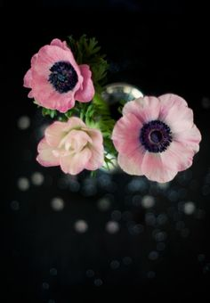 pink-flowers-on-black-background