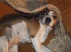 Moje Mendy. Dogs, Animals, Animales, Animaux, Pet Dogs, Doggies, Animal, Animais