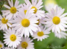Blumenbild Sonniger Herbst.  Leinwandbild, Fototapete oder gerahmter Kunstdruck