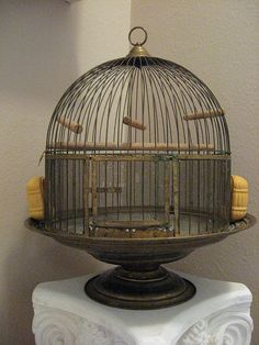 Vintage Brass Bird Cage by Hendryx on Pedistal Base Cool Bird Houses, Antique Bird Cages, The Caged Bird Sings, Pet Furniture, Bird Feathers, Beautiful Birds, Hanging Chair, Vintage Birdcage, Birdcage Decor