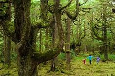 Image result for Rainforests of Haida Gwaii