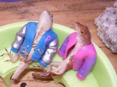 lizards how cute! but sereously take them out of there!
