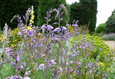 Required Reading: Beth Chatto& 5 Favorite Flowers for a Gravel Garden Gravel Landscaping, Gravel Garden, Dry Garden, Garden Path, Front Gardens, Small Gardens, Flower Seeds, Flower Pots, Flowers