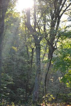 There is something about sunbeams through the trees at Hope Springs Institute