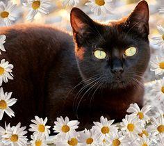 """Black cat  """"My New Friend"""""""
