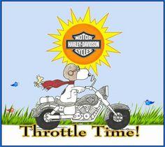 Harley Motorcycles On Pinterest Motorcycles Harley