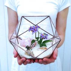 Icosahedron Large Geometric Glass Terrarium / Handmade Glass Planter geometric terrarium‬ glass terrarium‬ ‪stained glass‬ ‪stained glass terrarium‬ loveglass‬ ‪‎loveglass lenka‬ ‪‎3d stained glass‬ ‪stained glass 3d‬ ‪air plant‬ ‪succulent‬ ‪‎icosahedron‬ ‪3d‬ ‪icosahedron3d‬ ‪3d icosahedron‬ ‪cactus‬ ‪terrarium‬ ‪geometric shapes‬ Hexagonal Bifrustum‬ ‪Hexagonal‬ ‎ Modern Planter‬ ‪Glass Display Boxes‬ Hanging Terrarium‬ ‎Hanging GlassTerrarium‬ Crystals