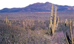 En Baja California Sur se ubica el famoso Desierto del Vizcaíno.