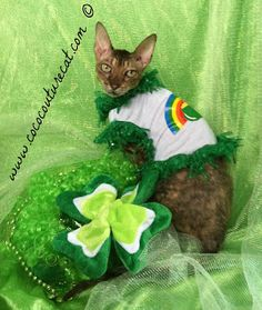 Coco, the Couture Cat: Fashion Friday?? Leapin' Leprechauns! Green Beer, Pet Fashion, Cat Walk, Leprechaun, Fundraising, Friday, Couture, Pets, Animals