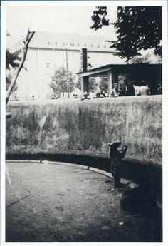 Königsberg (Pr.), Tiergarten, Tiefgehege am Eingang Hufenallee