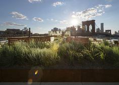 Galeria de James Corner Field Operations projeta cobertura jardim no Brooklyn, Nova Iorque - 5