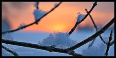 The snow in the trees by vlastanav11