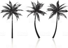 Black palm tree silhouettes on a white background royalty-free stock vector art