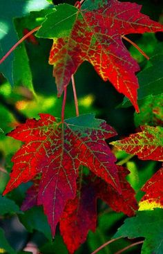 ** green & red