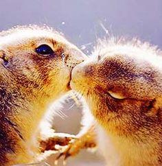 Prairie dog love<3