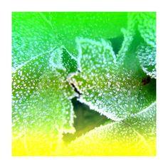 'Herbst - Frostig - Pflanzen lemon fresh' von Marion Waschk bei artflakes.com als Poster oder Kunstdruck $16.63
