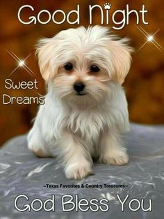 Good Night image Good Night Sweet Dreams God Bless You Cute Dog. Good Night Dear, Good Night Prayer, Good Night Sleep Tight, Good Night Blessings, Good Night Gif, Good Night Sweet Dreams, Good Night Quotes, Day For Night, Gud Night Images