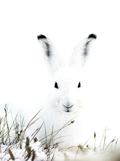 Black and White Bunny: http://ourbeautifulworldanduniverse.com/rabbits.html