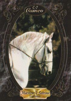 "MAESTOSO II SABRINA ""SMOKEY"" - LIPIZZAN STALLION HORSE COLLECTOR CARD 2 Collector Cards, The Collector, Lippizaner, Lipizzan, Horse Face, White Horses, Faces, The Face, Face"