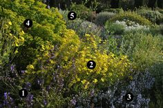 1 : Salvia 'Amparito'  2 : Cistus x tardiflorens  3 : Salvia 'Château Cathare'  4 : Euphorbia ceratocarpa  5 : Romneya coulteri Plant Design, Garden Design, Landscape Architecture Design, Green Technology, Beach Gardens, Drought Tolerant, Shade Garden, Woodland, Gardening