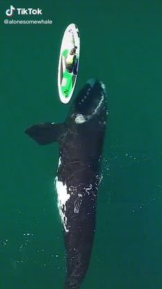 Animals Amazing, Animals Beautiful, Sea Whale, Beautiful Sea Creatures, Fuzzy Wuzzy, Cute Animal Videos, Exotic Fish, Humpback Whale, Watercolor Animals