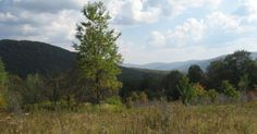 Reserve camping sites online in Little Pond Campground. When you need to get off the grid for awhile, there's no better place to do it than this remote Catskills oasis. Little...