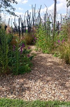 Striving for Survival - cancer garden - conceptual gardens --So what did Plews enjoy at RHS Hampton Court 2016?