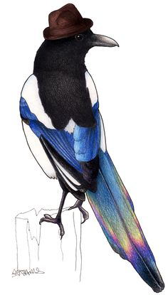 Magpie in a Trilby from the Birds in Hats collection.