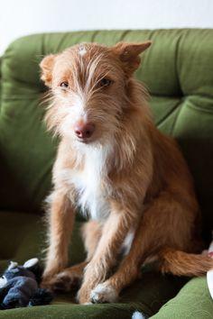 Beagle, Corgi, Animals And Pets, Baby Animals, Cute Animals, Baby Puppies, Dogs And Puppies, Hounds Of Love, Carnival Of The Animals
