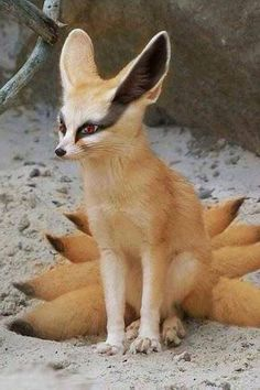 A fennec kitsune, just like Furcadia's kitsukin! (But with more tails)