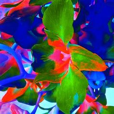 Beauty and colour at its finest by Amanda Elizabeth Sullivan Cambridge United Kingdom, Framed Prints, Canvas Prints, Manga Drawing, All Art, Art For Sale, Amanda, Abstract Art, Tapestry