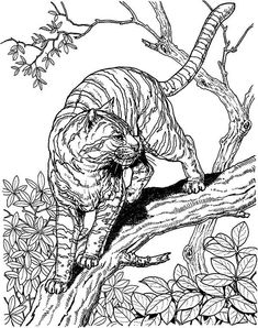 Hard Owl Coloring Pages | Tiger Liked Wild Cat In The Wild Coloring Page
